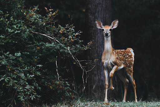 Protecting Your Winter Landscape – Effective Tips for Deer-Proofing